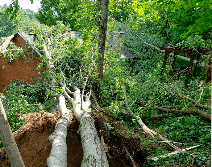 Wind Damage Emergency Services Tree Removal